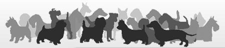 Rocky Mountain Earthdog Club